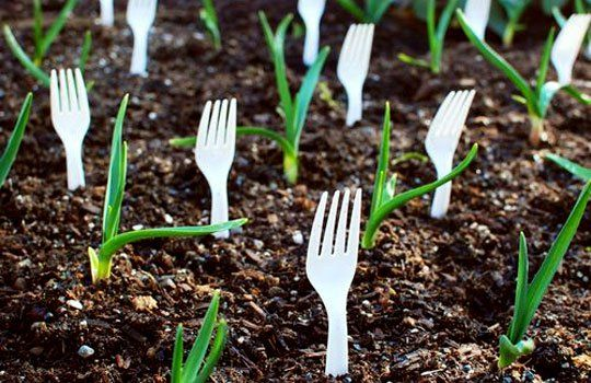 Plastic forks inserted stem side down into the ground can help keep little critters away from small plants. Totally going to try it this year to deter our annual bunny invaders.