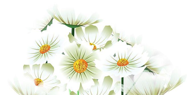 Tubes fleurs tubes bloemen flowers pinterest for Amaryllis deco