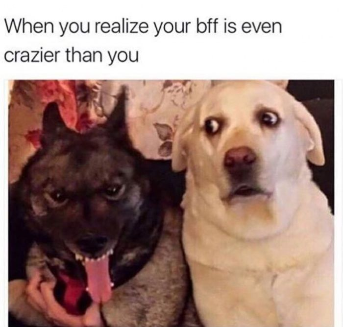 Oh shit this is real  funny pics, funny gifs, funny videos, funny memes, funny jokes. LOL Pics app is for iOS, Android, iPhone, iPod, iPad, Tablet
