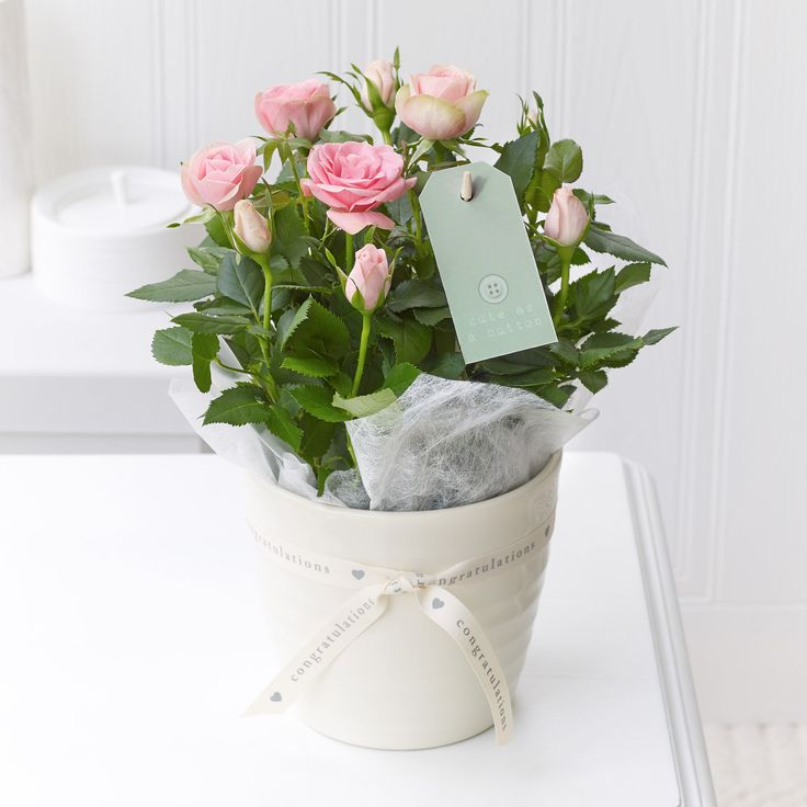 24 best new baby images on pinterest flower arrangements this elegant potted rose plant breathes new life just like the birth of a baby negle Images