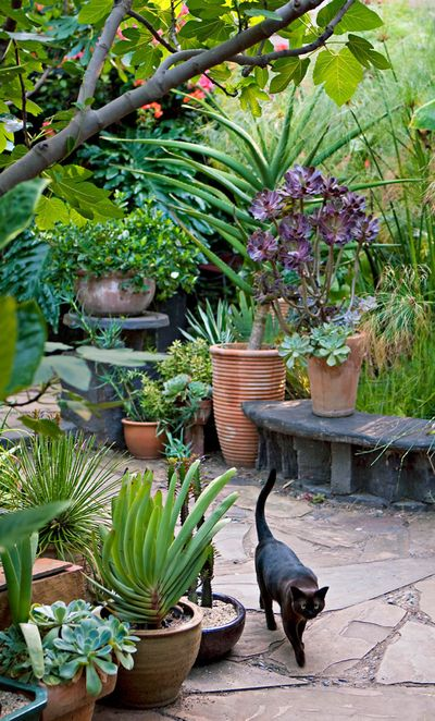"""I like the idea of a """"potted"""" garden. If you leave, you can take it with you!"""
