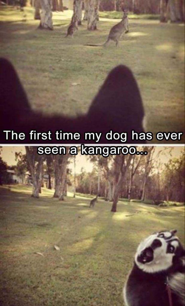 Funny Animal Memes Of The Day 52 Pics Ep20 Lovely Animals World Relatablememes Funny Animal Jokes Animal Jokes Funny Dog Memes