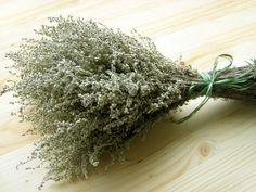 Лечение полынью в народной медицине - Экологическое землетворчество | Экологическое землетворчество