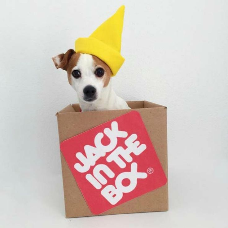 Jack Russell Wins Halloween With 31 Days Of Costumes
