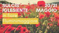 Cucina e Fantasia: Sulcis Iglesiente in fiore: Fluminimaggiore vi asp...