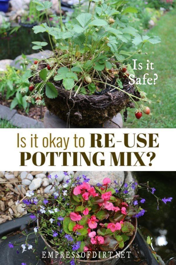 Is It Safe To Reuse Potting Soil Or Should I Start Fresh