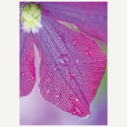 Flower #postcards