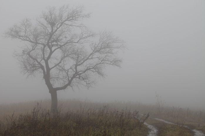 Загит Шагабутдинов / Canon EOS 5D Mark II / туман, природа, пейзаж