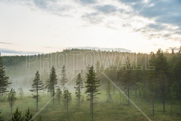 Soul of Silence - Fototapeter & Tapeter - Photowall