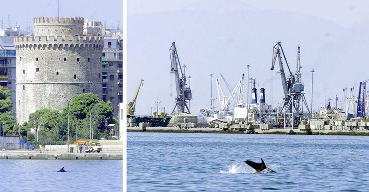 Μικρά δελφίνια μαγνητίζουν του Θεσσαλονικιούς - κόβουν βόλτες στα νερά του Θερμαικού