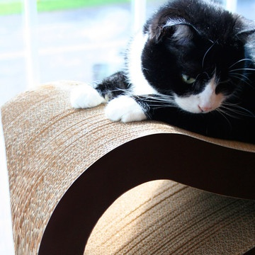 41 best images about lounging cats on pinterest cat shelves cats and lounges - Modern cat scratcher ...