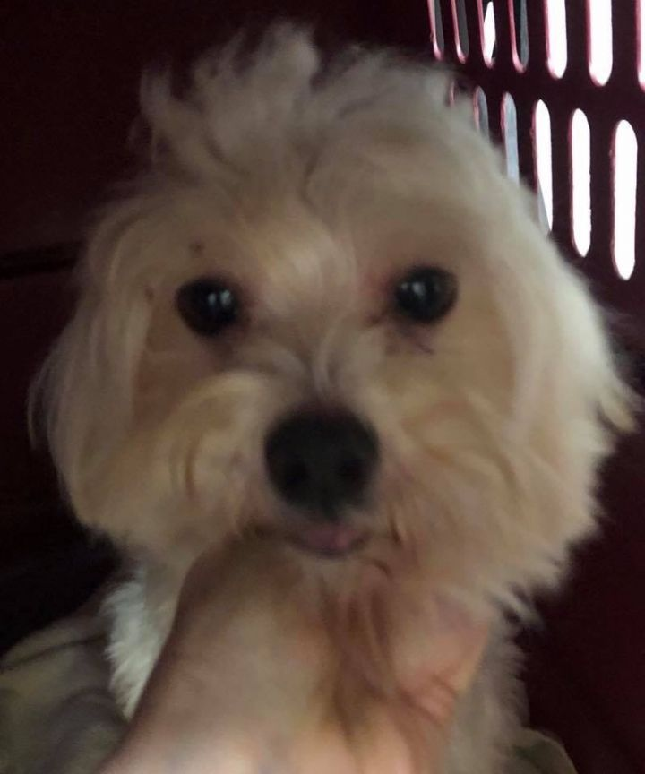 Adopt Sugarbaby On Dog Adoption Help Homeless Pets Pet Care Tips