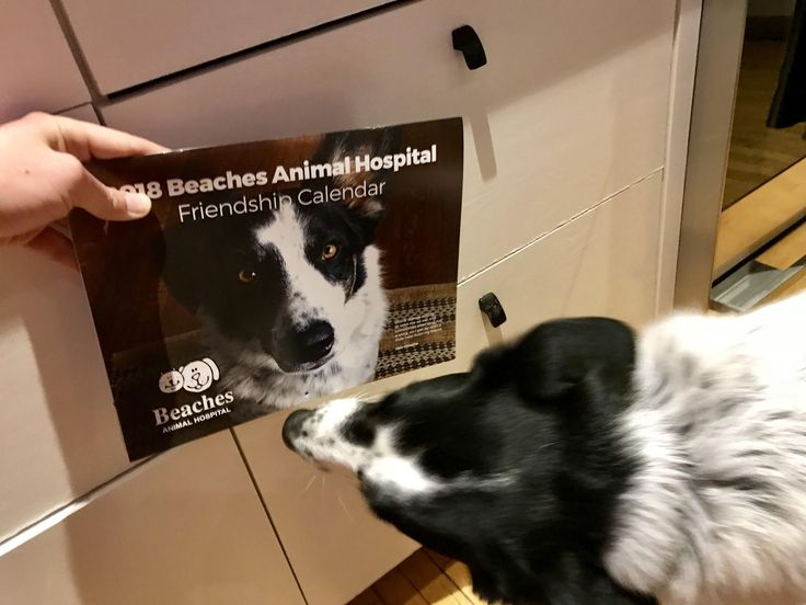 Ill see your proud cab driver and his calendar and raise you my dogs joy at making the cover of his vets annual calendar #funny #meme #LOL #humor #funnypics #dank #hilarious #like #tumblr #memesdaily #happy #funnymemes #smile #bushdid911 #haha #memes #lmao #photooftheday #fun #cringe #meme #laugh #cute #dankmemes #follow #lol #lmfao #love #autism #filthyfrank #trump #anime #comedy #edgy