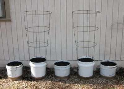 Living Prepared    : My Bucket Garden 2009
