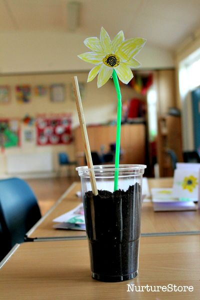 how to grow sunflowers with children and run a school gardening club
