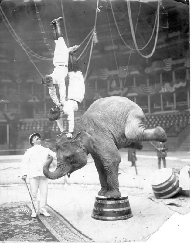 Circus Performers at Madison Square Garden