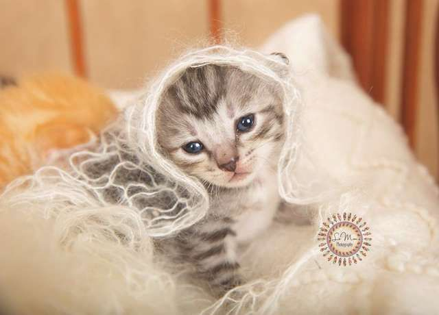 Newborn Rescue Kittens Get The Most Adorable Photo Shoot