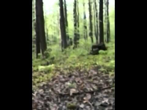 Hunters film several sasquatches in remote Idaho wilderness 2013. Bigfoot Sightings ...