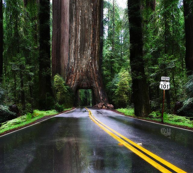 drive through, literally, the CA redwoods