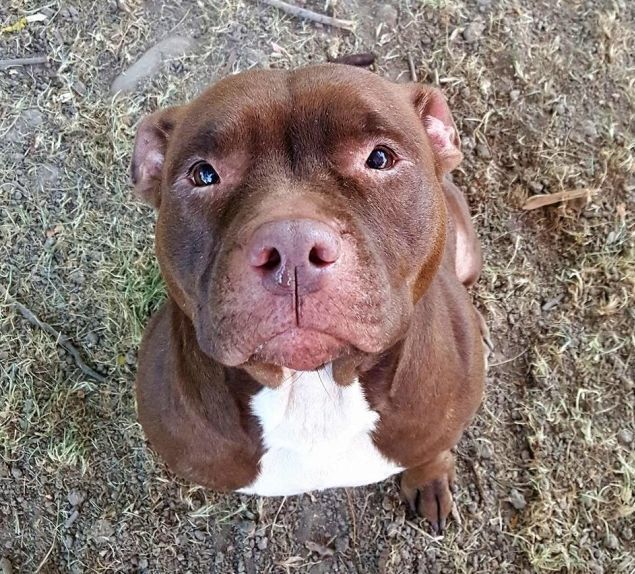 Over 6 000 Dog Lovers Ask Ohio Shelter To Stop Euthanizing All Pit