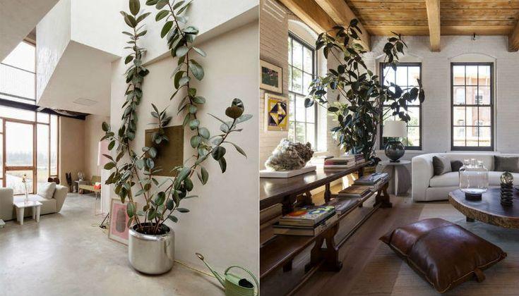 Over 1000 id?er om Stueplanter p? Pinterest Planter, Planter og ...