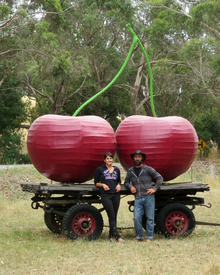 big cherries fleurieu cherries • South Australia • pages flat road near mount mount • aussie big things tour