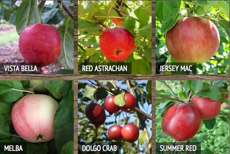 Arlington Orchards sells 27 varieties of apples on PEI! Come spend a day apple picking on beautiful PEI! http://arlingtonorchards.com/