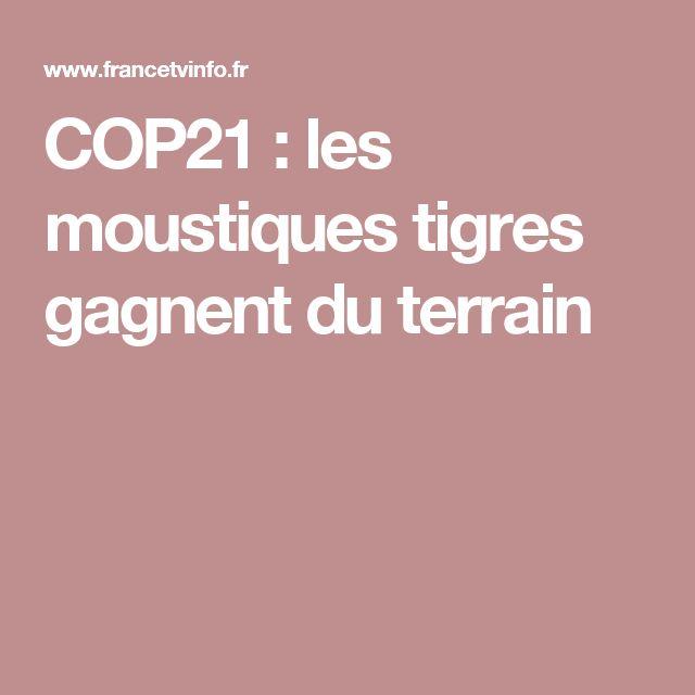 COP21 : les moustiques tigres gagnent du terrain