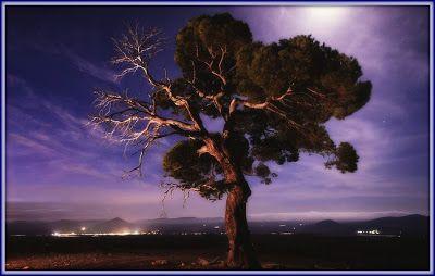 Γη και Ελευθερία.: Aυτά τα δέντρα δε βολεύονται με λιγότερο ουρανό......