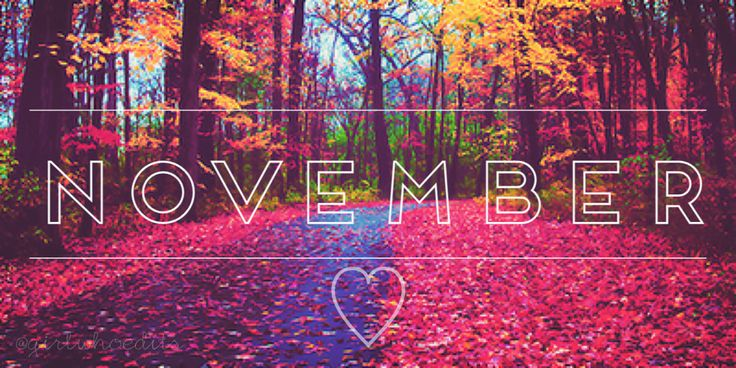 November                                                                                                                                                                                 More