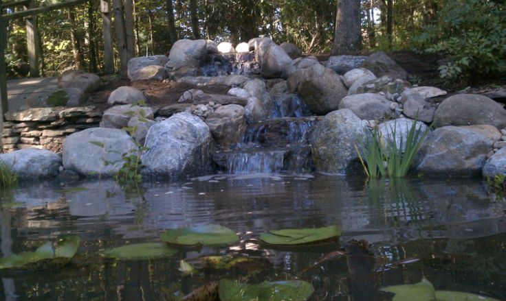 8x11 ecosystem pond in natural setting http for Garden pool ecosystem
