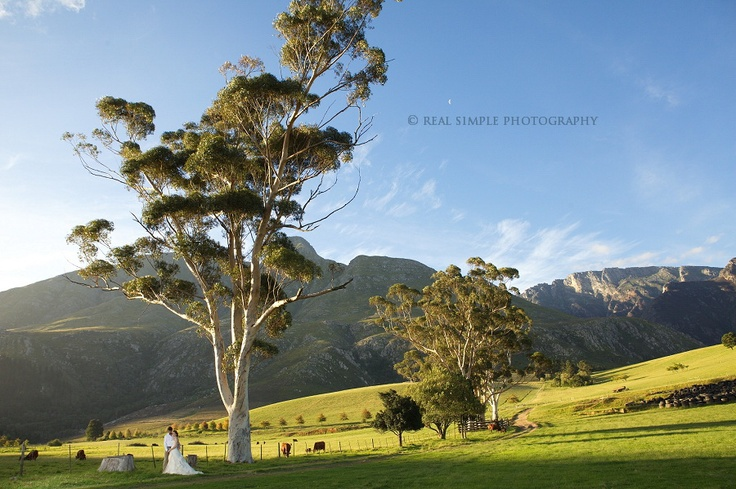 Swellendam Wedding Photos   Cape Town Wedding Photographer