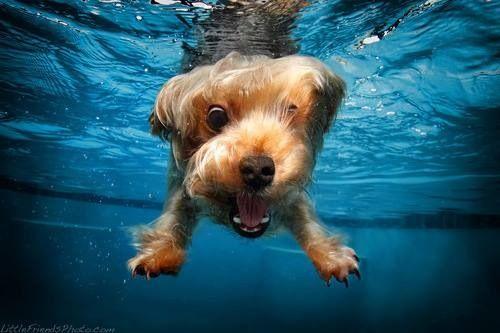 Swimming .... Yahhh