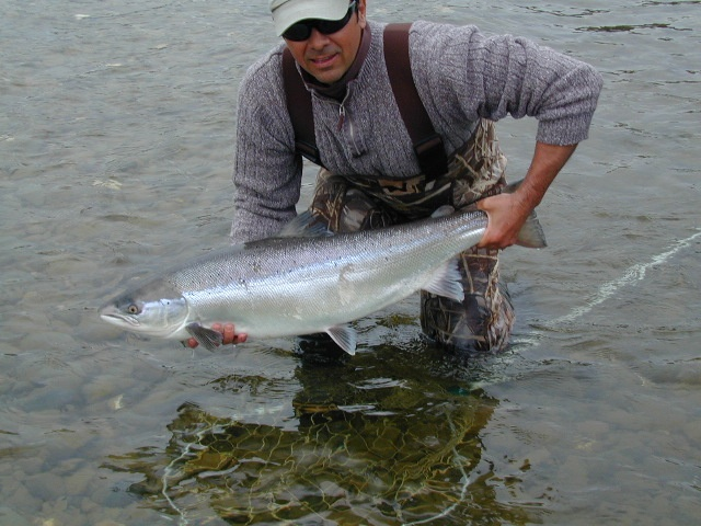 A beautiful atlantic salmon from the restigouche river in for Fishing in quebec