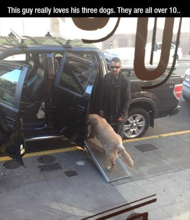 This guy really loves his dogs