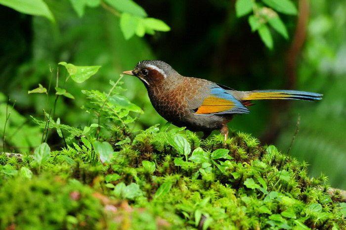 Экзотические птицы азиатских тропиков от фотодуэта Sushyue Liao