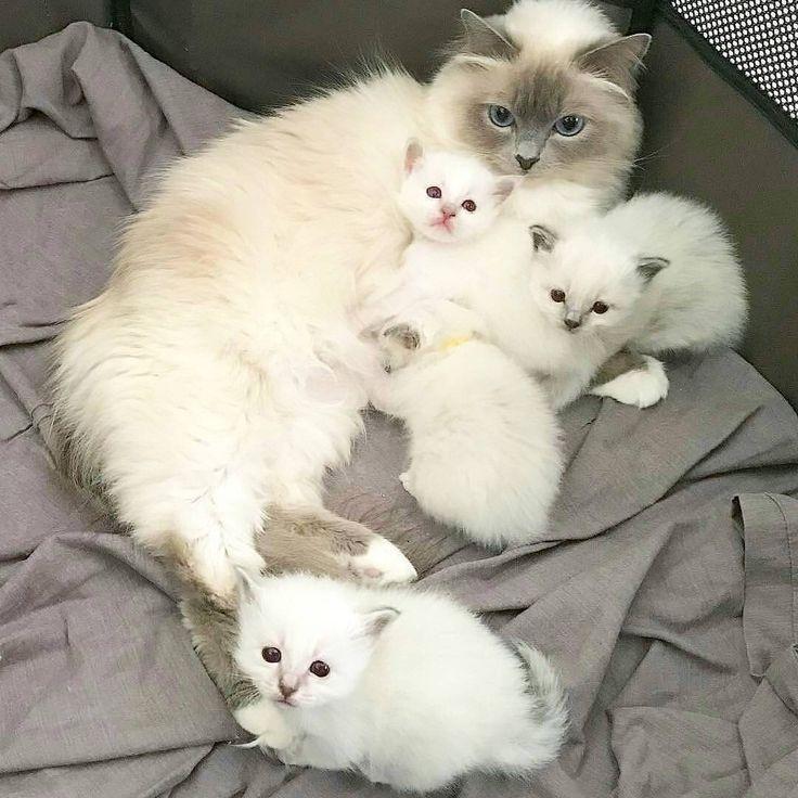 Gorgeous kitty family