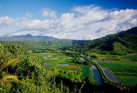 Hanalei Valley...Kaua'i...the birthplace and home of my Mom...