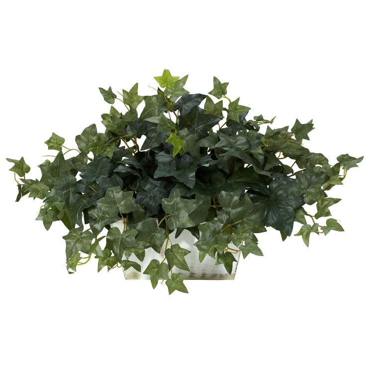 Ivy with White Wash Planter Silk Plant - Overstock.com $37.38 - 14 inches high x 24 inches wide x 11 inches deep