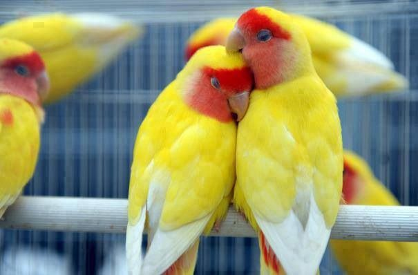 Nice Couple of Love Birds