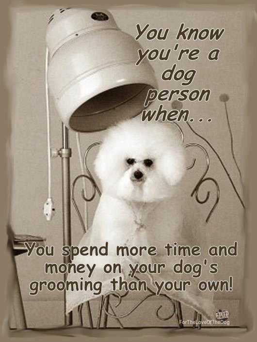 : Dogs Quotes, Grooms True, Dogs Grooms, Beautiful Bichon, Animal Fun, So True, Animal Friends, Bichon Frise Funny, Animal Birds