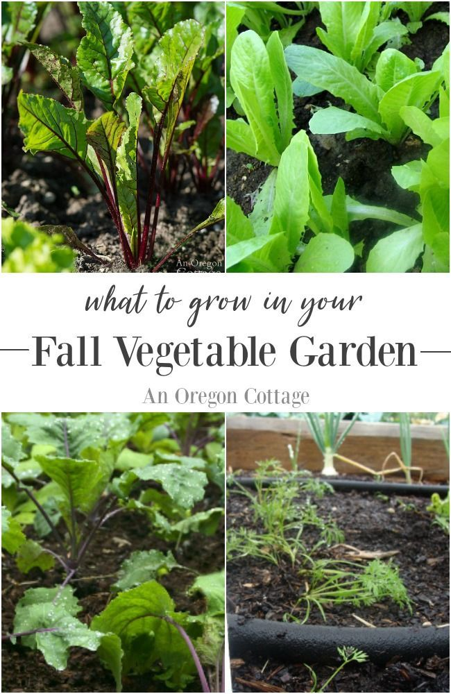 Vegetable Planting For Fall What To Grow Fall Garden Vegetables
