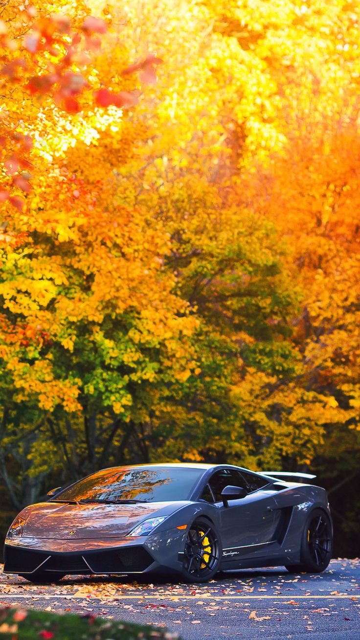 lamborghini, autumn, gallardo, superleggera, lp570