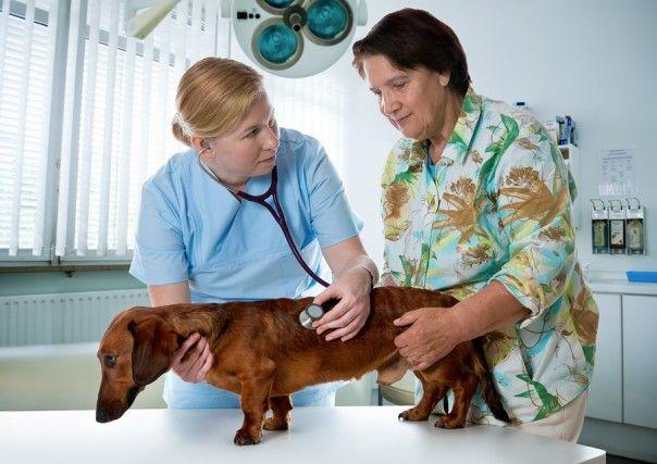 Köldöksérv kutyáknál: típusok, okok és kezelési lehetőségek