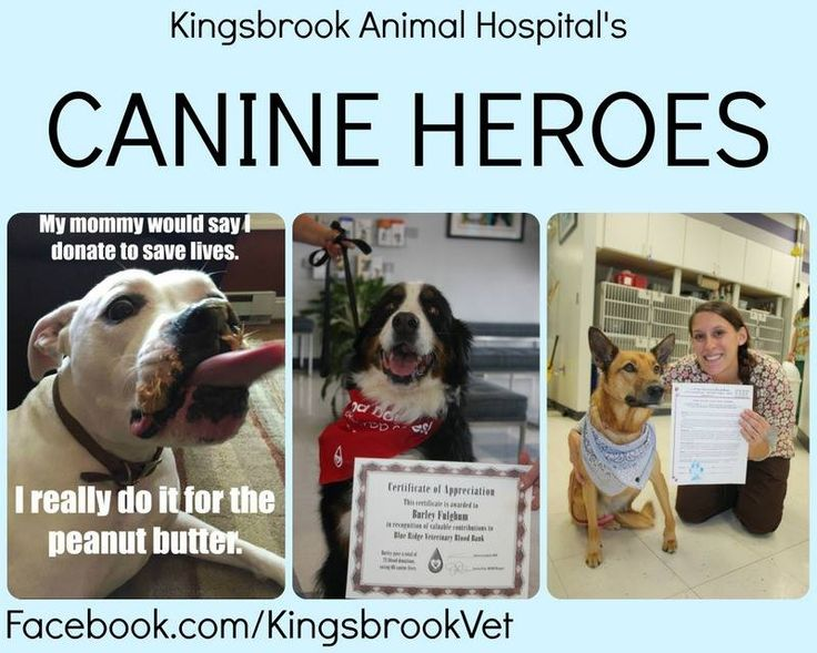 Here are a few of our heroes! #AnimalHospital #Veterinarian #Pets #KAH #FrederickMaryland #KingsbrookAnimalHospital #Vet #BloodDonation #CanineBloodDoners #CanineHeroes #BlueRidge #BloodBank