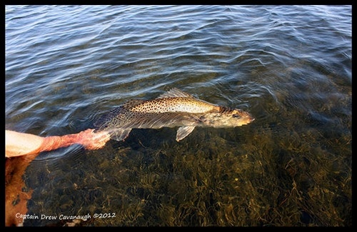 29 best images about fishing on pinterest sharks chris for Florida saltwater fishing