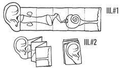 El interior del oído. Ficha para construir