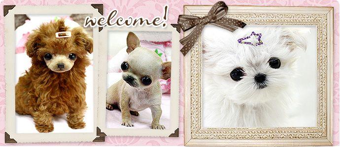 Customer Testimonials — Boutique Teacup Puppies Blog