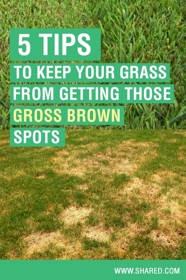 5 Tips To Keep Your Grass From Getting Those Gross Brown Spots Summer Grass Grass Green Tips