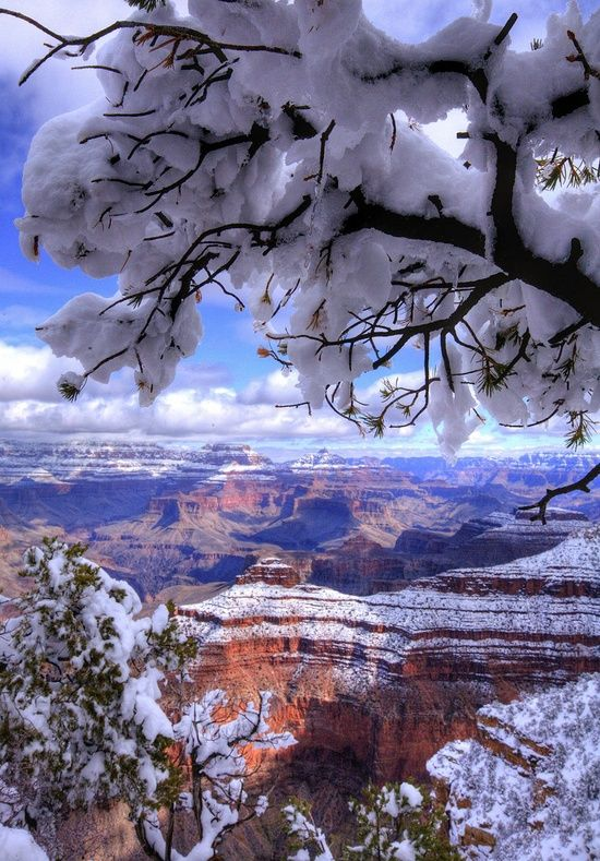 The Grand Canyon in winter.: